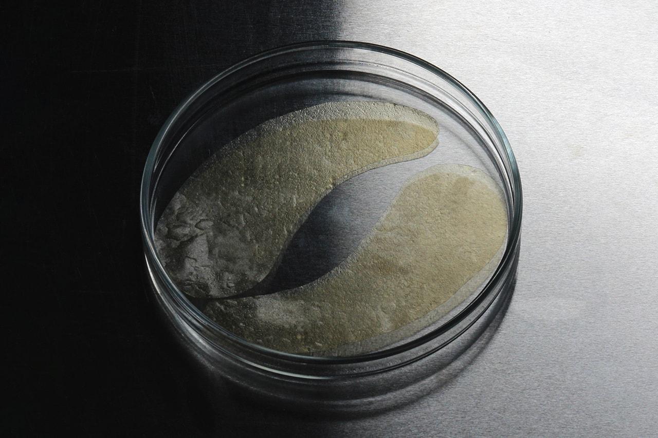 haeckels grown to order under eye masks bio restore membrane ocean sea seaweed agar details buy cop purchase how it works price order