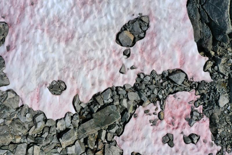 pink algae glacier northern italy presena alps science climate change environment global warming sea levels sustainability