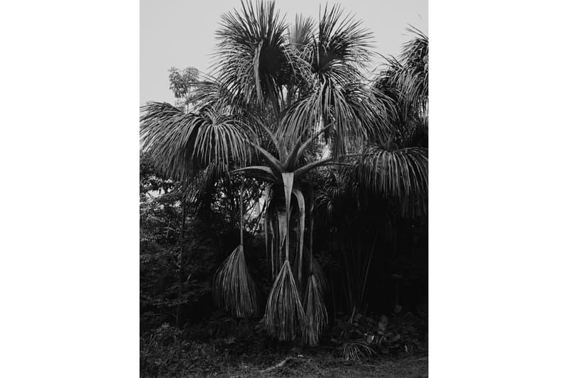rainforest foundation unity artists charity wolfgang tillmans tacita dean photography paintings artworks