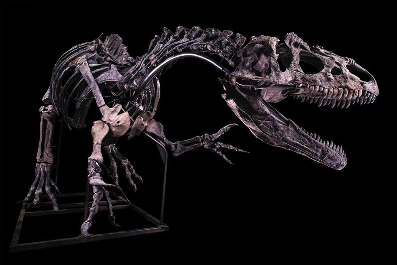 Allosaurus Skeleton Estimated 1 Million USD dinosaur fossil naturalia Maison Binoche et Giquello auctions