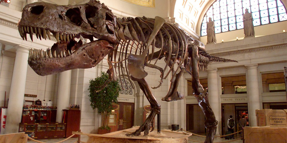 Scientists Think Dinosaurs Would Still be Walking the Earth if It Weren't for the Asteroid