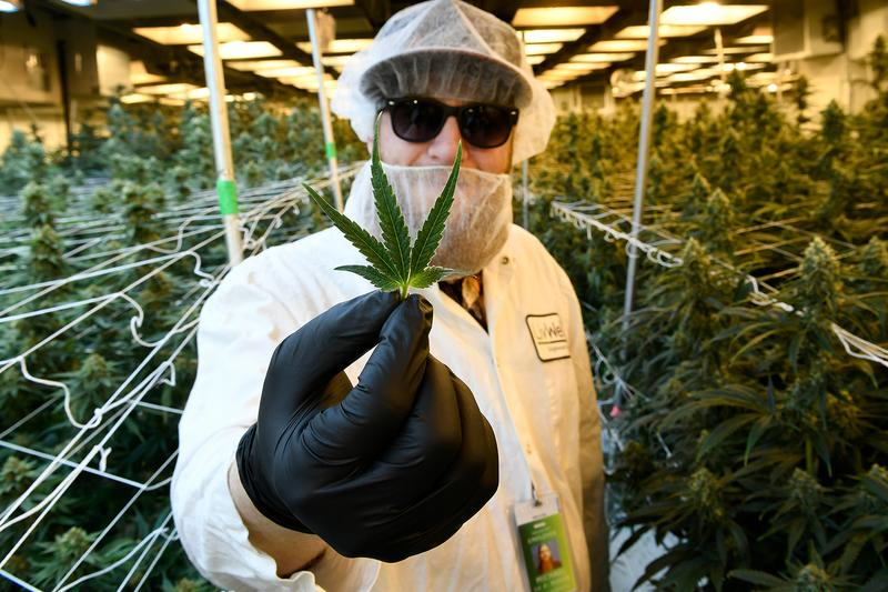 UN Commission Reclassifies Cannabis CBD Marijuana Weed Info