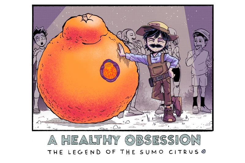 orange japanese sumo large knob uneven skin seedless delicious sweet hybrid seasonal winter easy to peel california dekopon