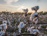 The North Face Looks Into U.S.-Grown Regenerative Cotton for Fall 2022 Collection
