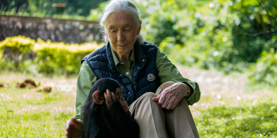 Learn the Life of Dr. Jane Goodall in This Immersive Multimedia Experience