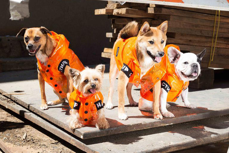 Heron Preston Collection Chiens