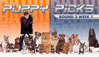 BATB 11 PUPPY PICKS: ROUND 3 WEEK 1