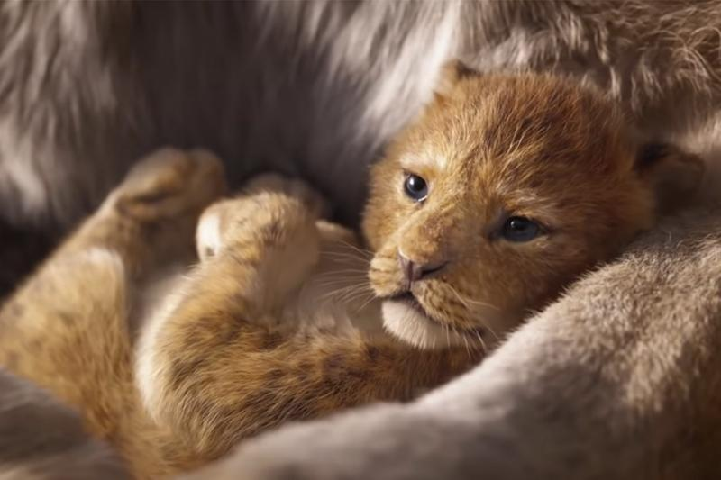 Disney 真人版電影《The Lion King》預告與動畫對照短片釋出
