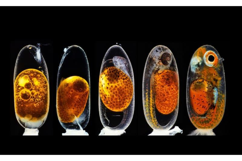 Nikon 2020《Small World Photography Competition》顯微攝影大賽得獎作品正式公佈