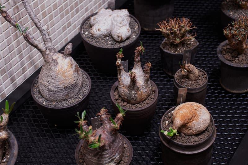 台灣新興植物單位0343 CONSERVATORY 獨家分享種植入門教學