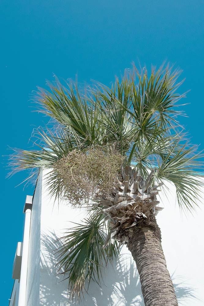 buena onda Summer Series 01 Myrtle Beach Florida