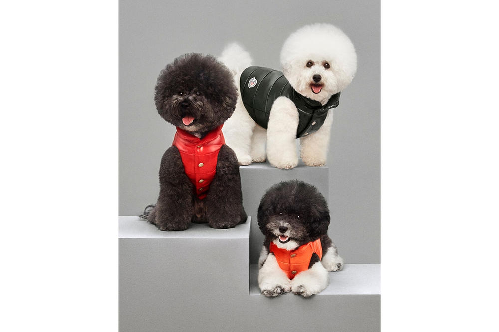 Moncler Dog Jacket Mondog Collection
