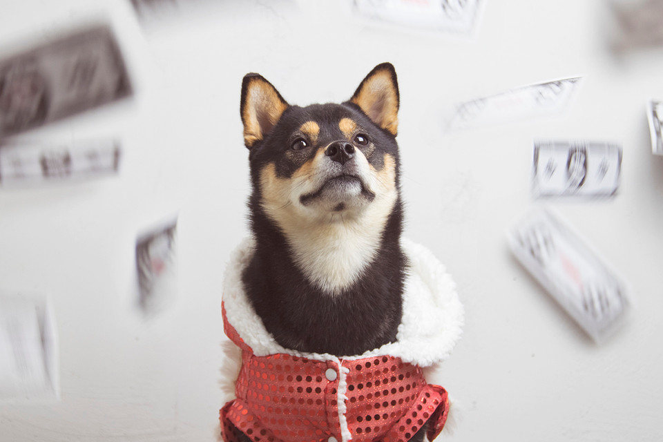 """cheap for discount e47fd 99746 How to Live Your Best Life in Year of the Dog, According to Dachi the  Shiba. """""""