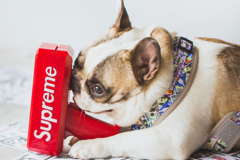 Where to Buy Fresh Pawz Streetwear for Dogs | HYPEBAE