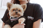 Picture of The 5 Best Streetwear Brands for Your Pet Featuring Pawmain & Pawkier