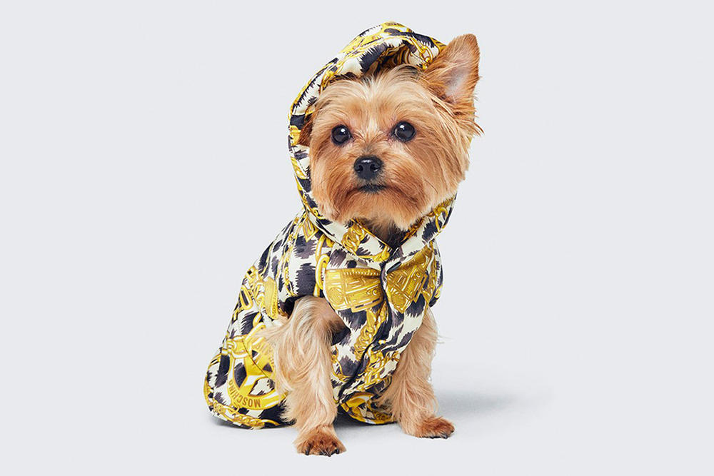 Moschino Jeremy Scott H&M Collaboration Petwear Dog