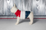 Picture of Moncler Debuts New Poldo Dog Couture for the Holiday 2018 Season