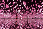 Picture of teamLab's New Light Installation Replicates Japan's Beautiful Cherry Blossom Blooms