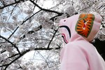 Picture of BAPE's New Sakura Collection Is Inspired by Cherry Blossom Blooms