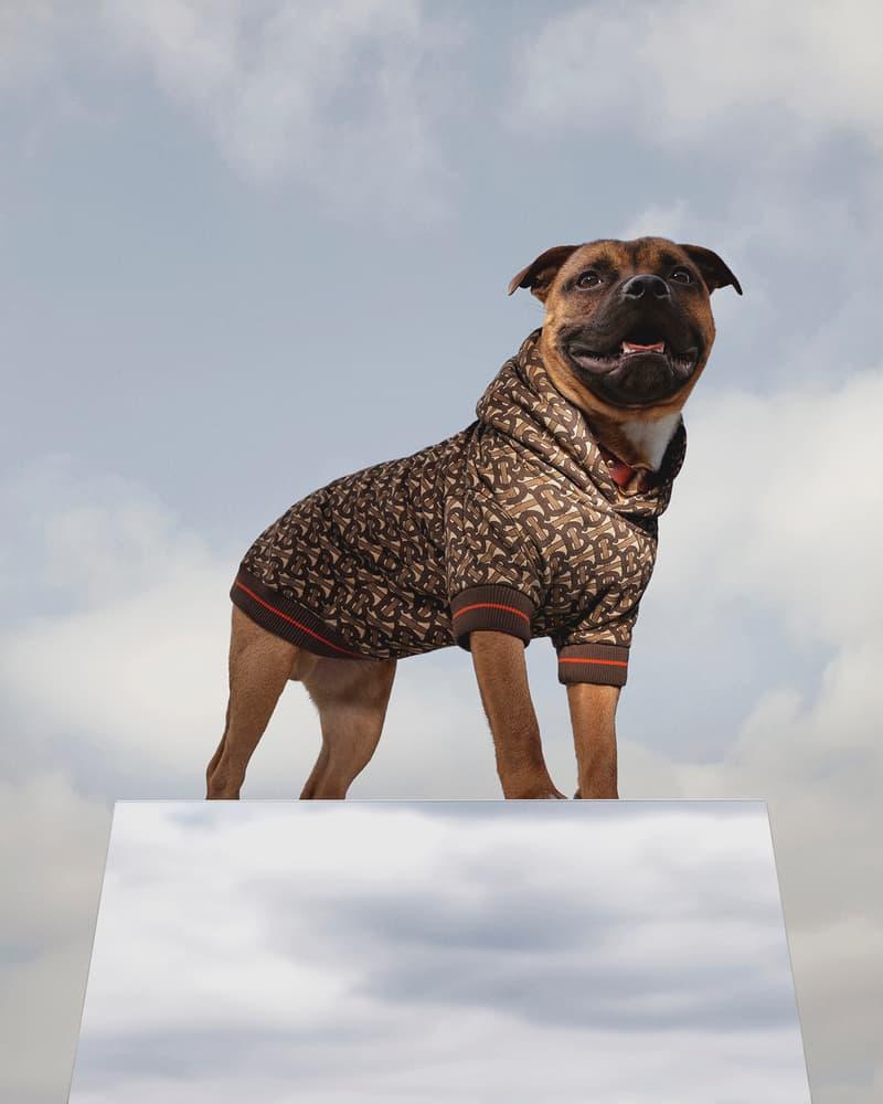 burberry b series dog puppy monogram hoodie