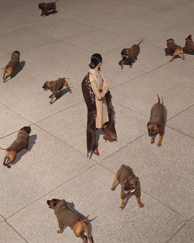 burberry b series dog puppy monogram hoodie model
