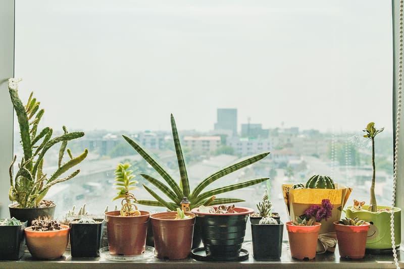10 Easiest Houseplants to Grow for Beginners | HYPEBAE