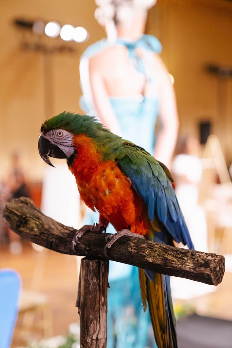 Slashed By Tia Spring Summer 2020 Presentation Parrot