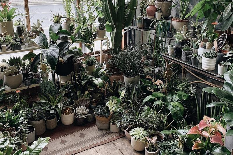 Best Plant Interior Inspiration Instagram Accounts Social Media Influencer Houseplants