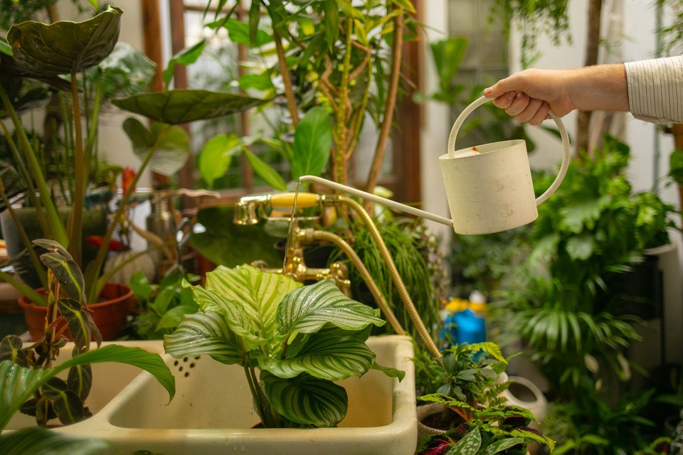 5 Tips for Buying & Caring for Healthy House Plants