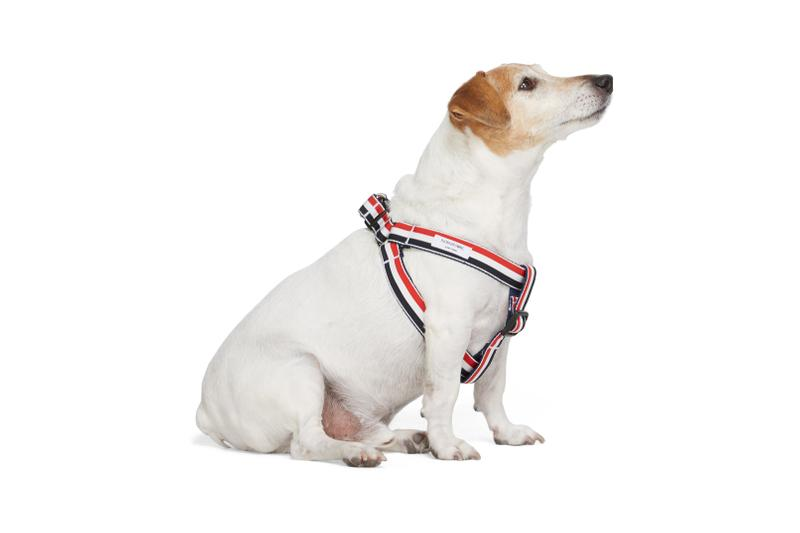 SSENSE Dog Clothing Harness Tricolor Webbing