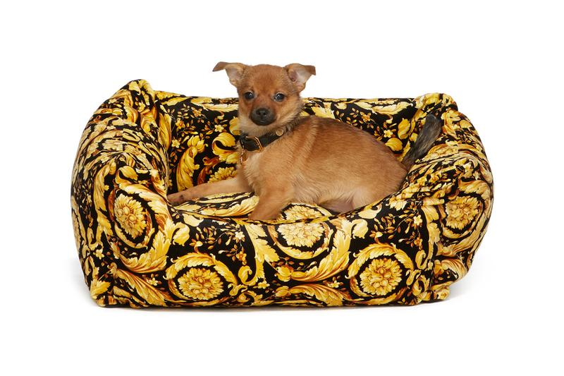 SSENSE Dog Clothing Versace Bed Barocco