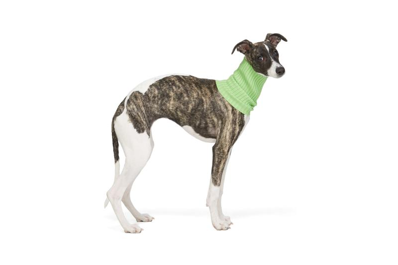 SSENSE Dog Clothing Giu Giu Turtleneck Collar Green