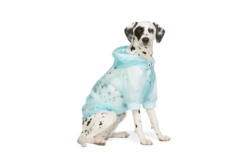 SSENSE Dog Clothing Moncler Genius Waterproof Coat Couture Edition Blue