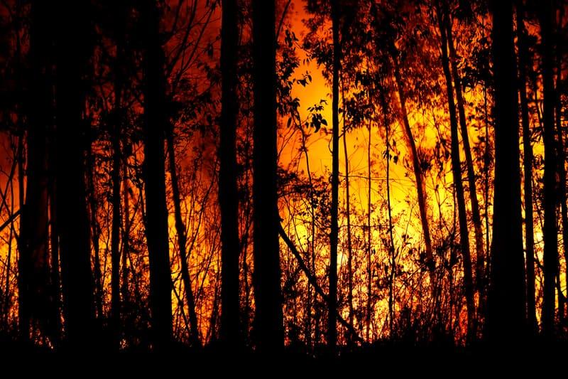 australia bushfire fire victims crisis donations charity world wildlife fund red cross