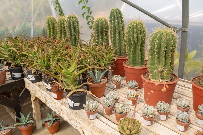 Best Plant Stores in London Succulent Cactus Where to Buy