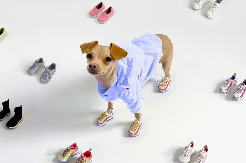 Boobie Billie Instagram Dog Fashion Influencer Style Sneakers Nike Air Max Balenciaga Sock Runner Pet Clothes Shoes Chihuahua