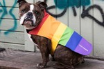 Picture of Stutterheim Releases Rainbow Dog Coat for Pride Month