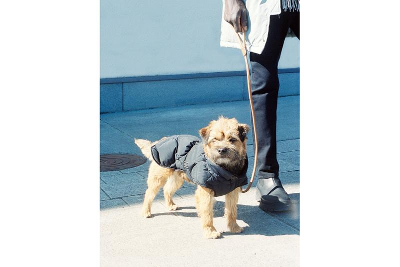 arket upcycled down jackets outerwear dogwear pets fall winter