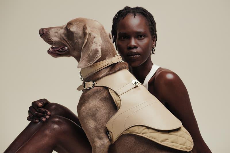 pagerie petwear brand luxury fashion house collar harness leash dorro babbi tascher price launch