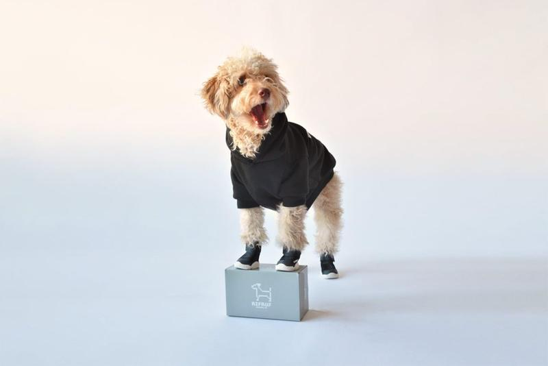 rifrufs dog sneakers shoes caesar queens new york city nyc poodle black