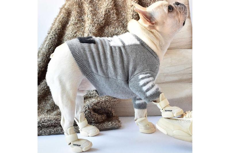 rifrufs dog sneakers shoes caesar queens new york city nyc frenchie white