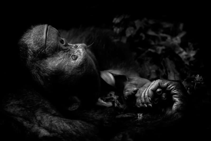 Wild Photographer of the Year 2017 の受賞作品をチェック 写真
