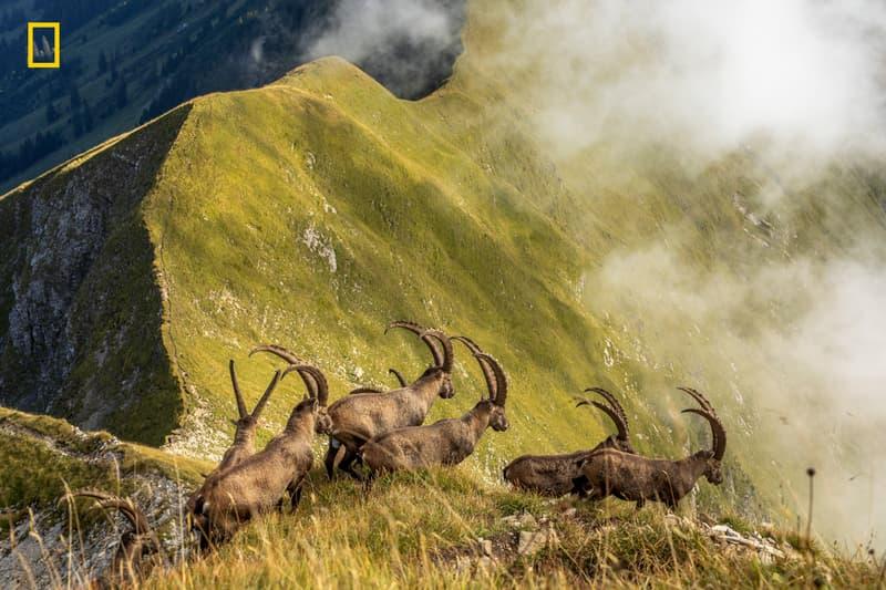 ナショナルジオグラフィック National Geographic