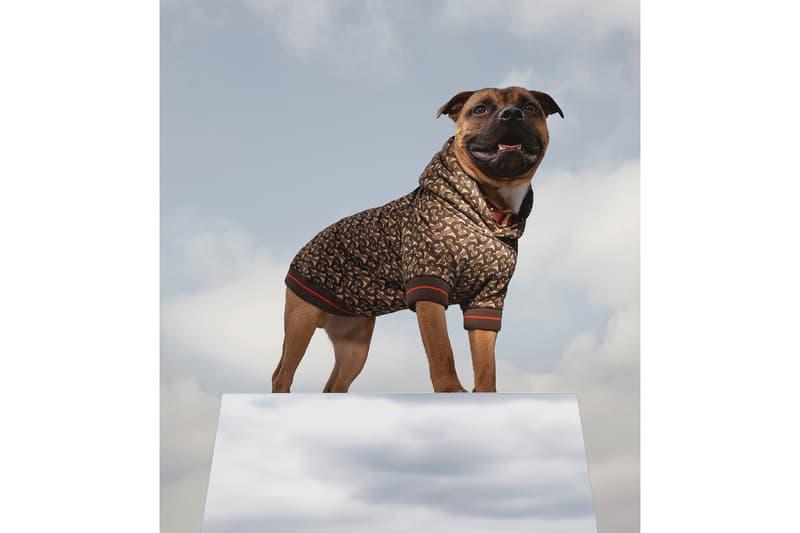 Burberry's バーバリー Latest B Series リカルド ティッシー Drop Is a Monogram Hoodie for Dogs B シリーズ よりリュクス感溢れるドッグウェアが登場