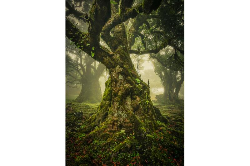 "国際的な風景写真コンテスト""International Landscape Photographer of the Year""が2019年度の受賞者リストを発表 international landscape photographer of the year winning photos photography photographers visuals pics landscape contemporary fine art"