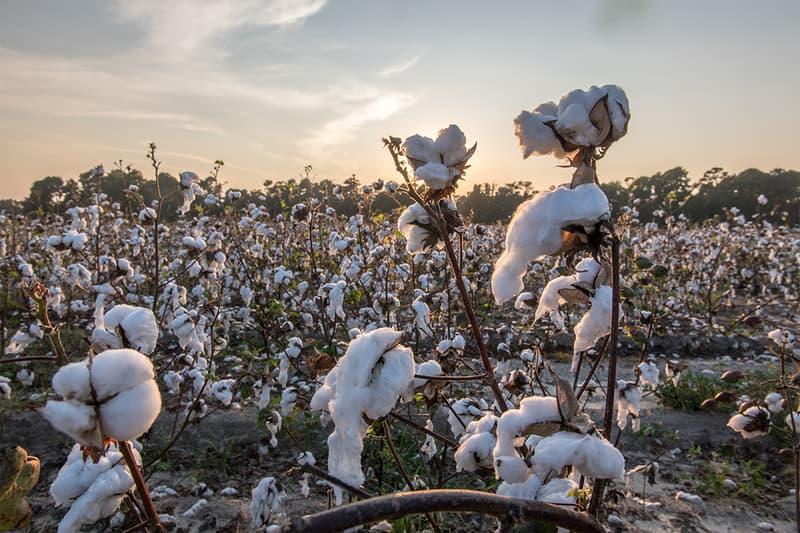 ザ・ノース・フェイスが米農業技術会社インディゴ アグリカルチャーとタッグを組み再生コットンの開発に取り組む  vf corporation the north face indigo ag sustainability environment climate change fall 2022 regenerative cotton