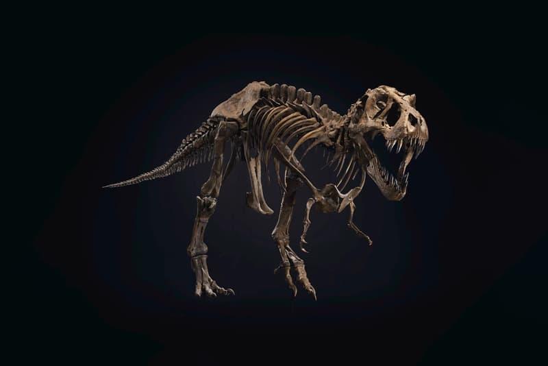 최고 예상 낙찰가 90억원, 6천7백만 년된 티라노 사우르스 화석이 경매에 부쳐진다