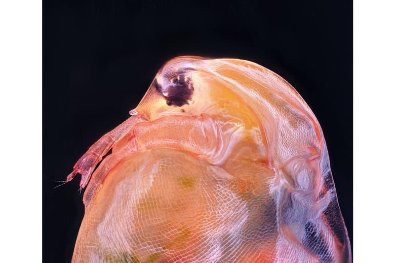 니콘, '2020 스몰 월드 사진 공모전' 수상작 공개, 포토그래퍼, 다이엘 카스트라노바, 현미경